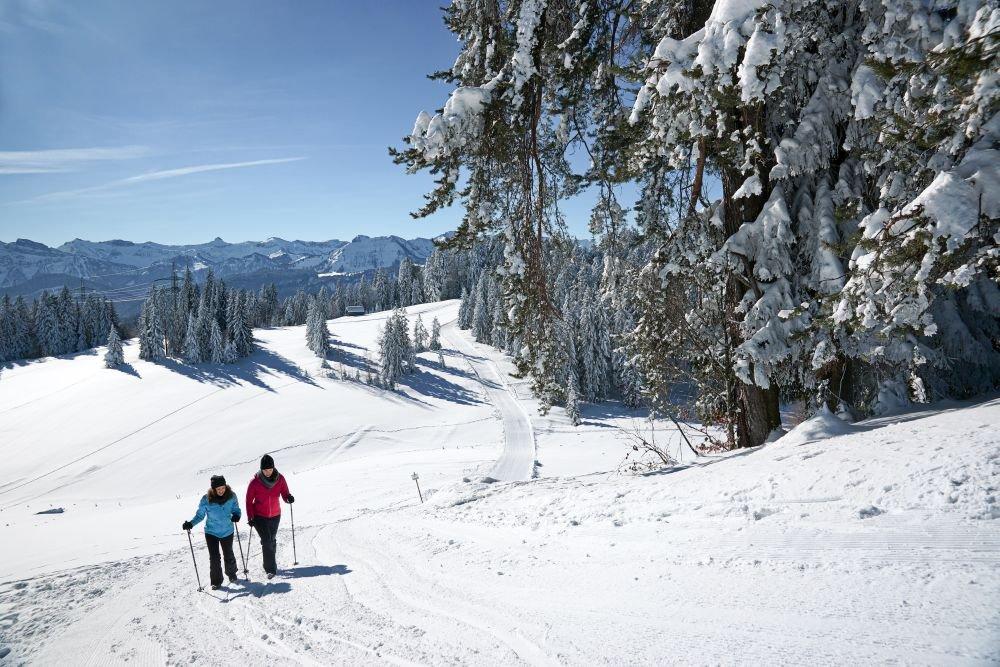 Winterwanderung am Brüggelekopf in Alberschwende, (c) TVB Bregenzerwald