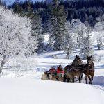 Pferdeschlittenfahrt im Bregenzerwald, Adolf Bereuter