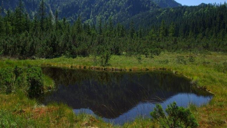 Hier erleben sie ein faszinierendes Ökosystem, © zVg TVB Göstlinger Alpen
