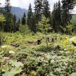 Natursschutzgebiet Leckermoor, © weinfranz.at