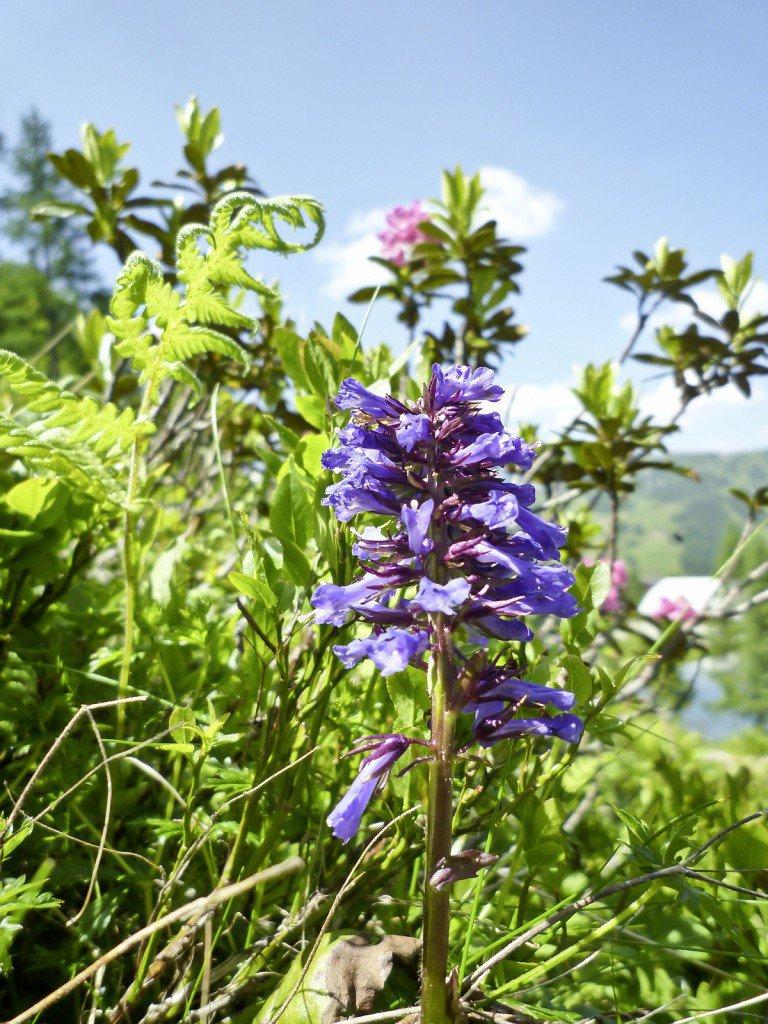 Wulfenia, © NLW Tourismus, Prokop