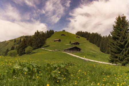 Almen, © Salzburger Saalachtal Tourismus