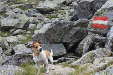 Wandern mit Hund, © Österreichs Wanderdörfer, Corinna Widi