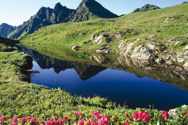 Almrosen im Alpbachtal, © Alpbachtal Seenland Tourismus