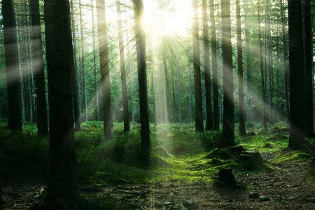 Wald, pixabay-com