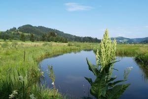 Hörfeldmoor, © Naturpark Zirbitzkogel-Grebenzen
