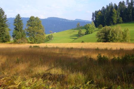 Krumbacher Moor, © Krumbach Tourismus