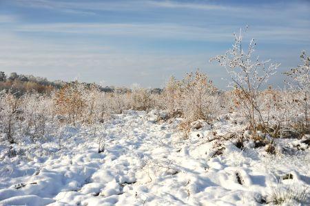 Winterwanderung durch Moor, pixabay