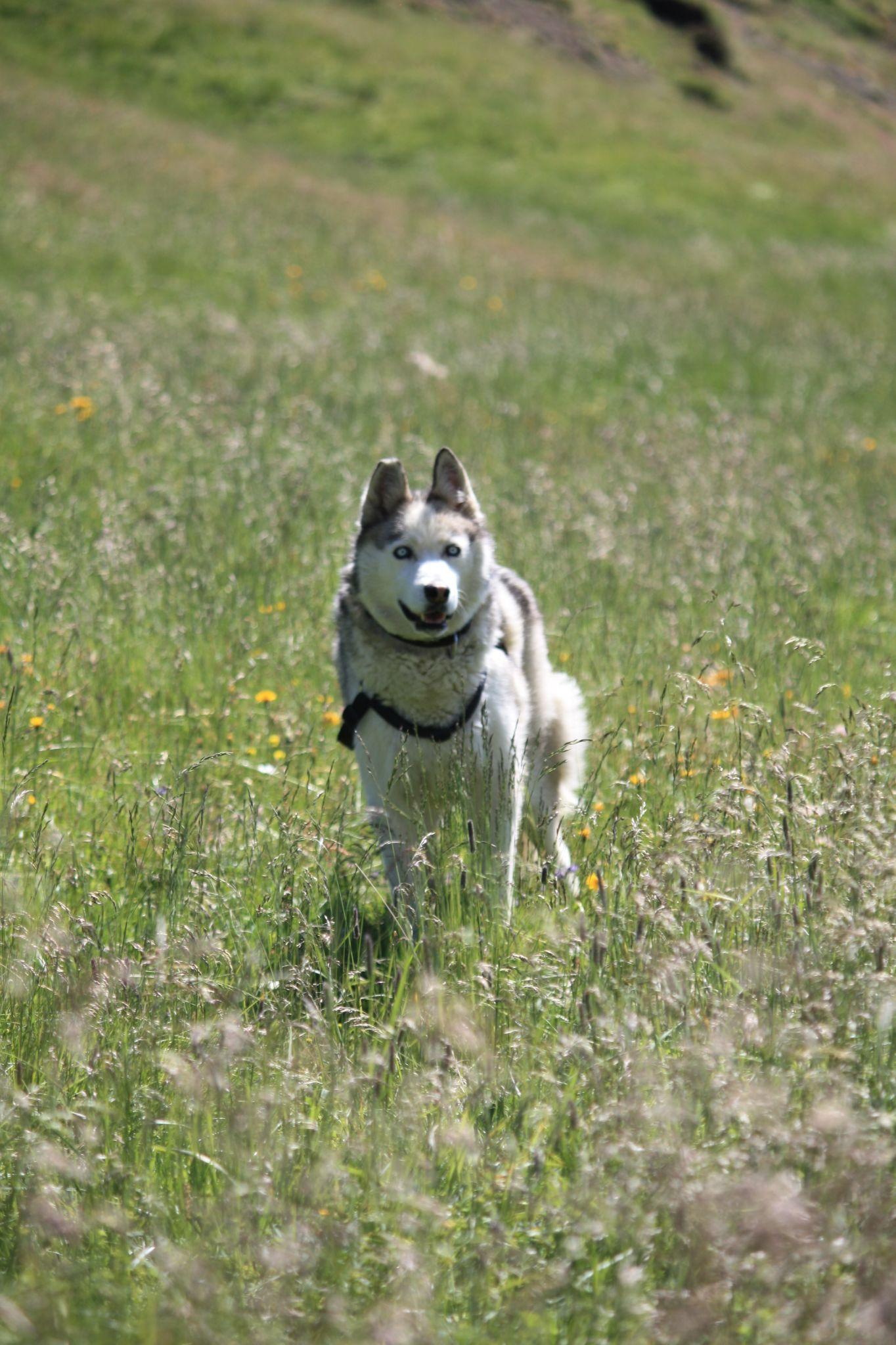 Mit Hund unterwegs, (c) Corinna Widi