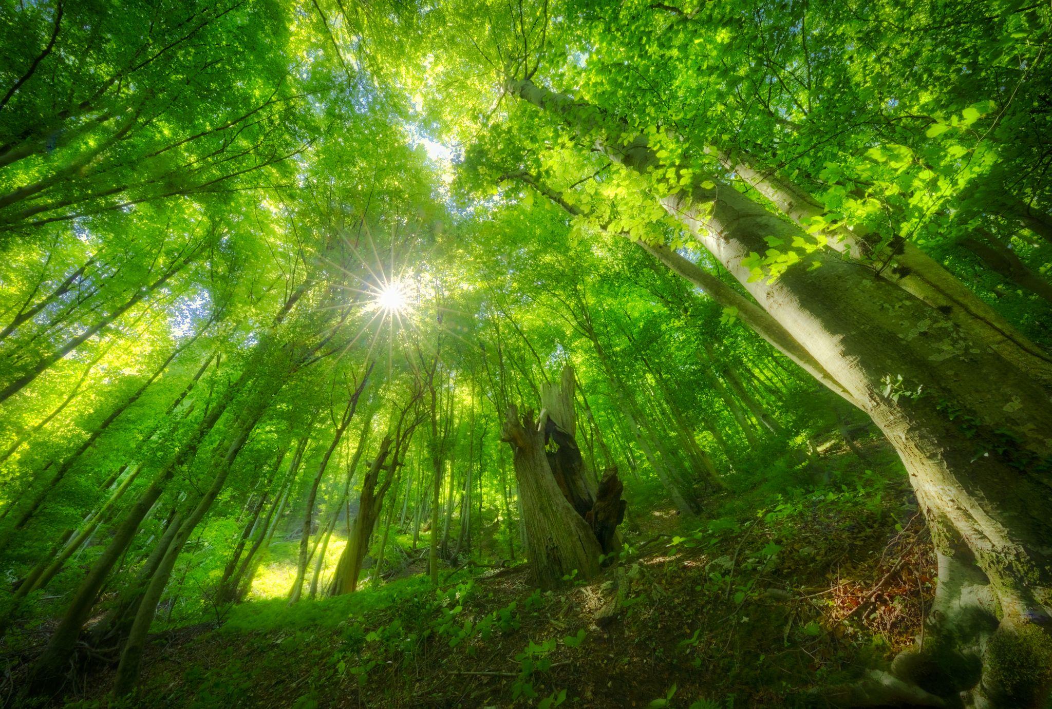 Magie im Wald, © Jörg Schmöe