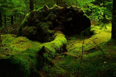 Waldboden ©Pixabay- 483207