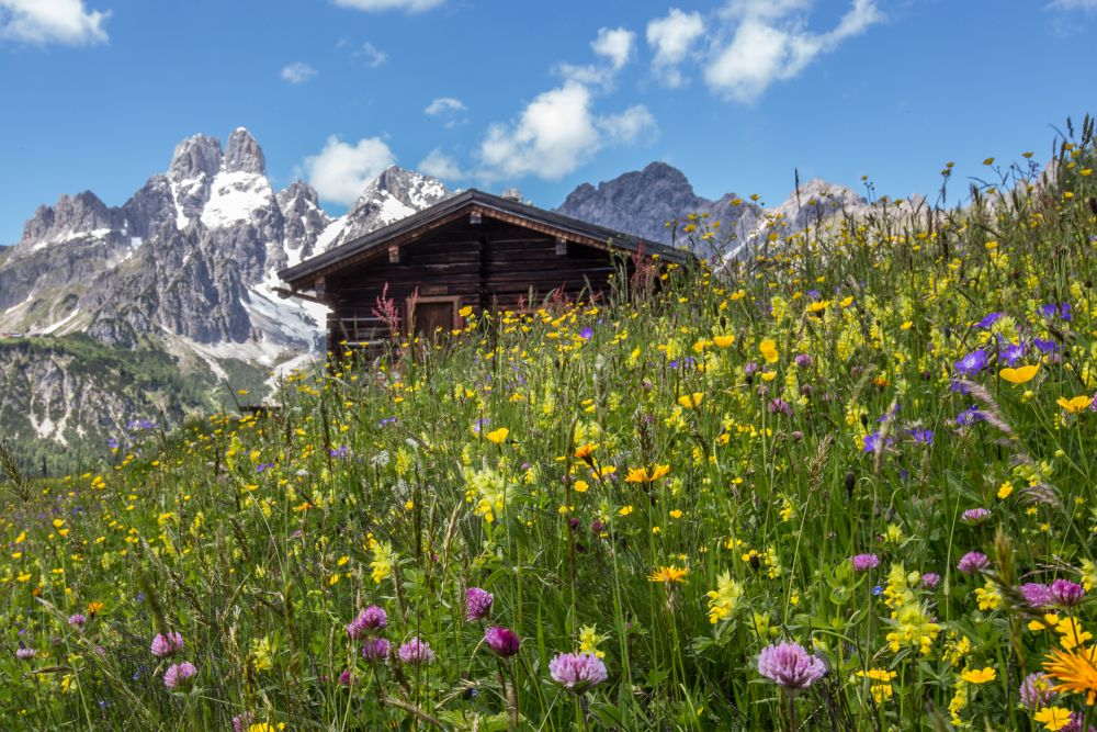 Blumenwiese mit Hütte und Bischofsmütze, © Tourismusinformation Filzmoos, Coen Weesjes