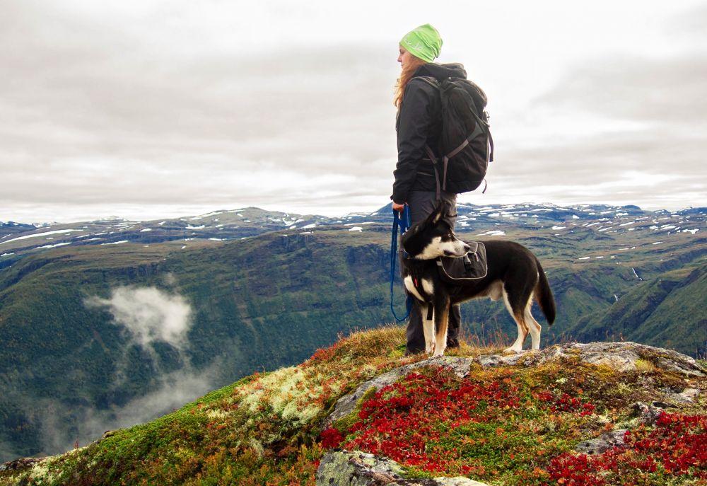 Hund-Leine, pixabay