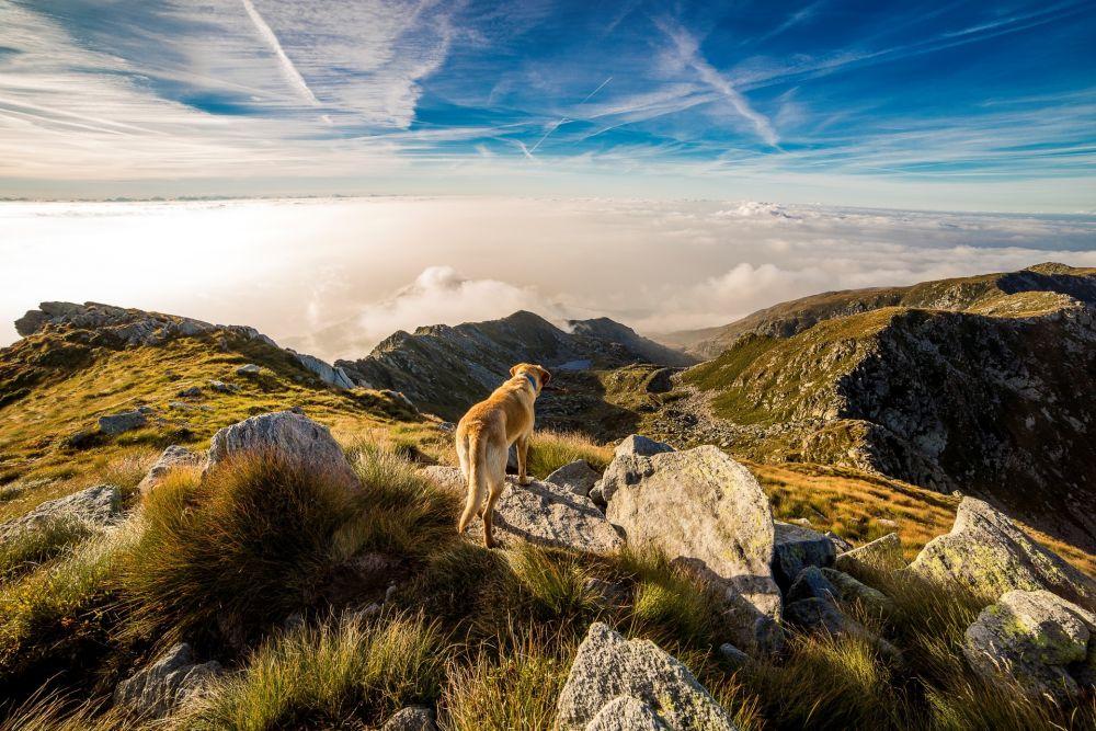 hund,pixabay