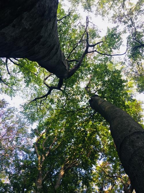Baum, ShinrinYoga