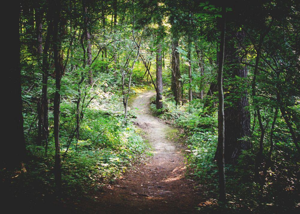 Wald Pfad 2, pixabay