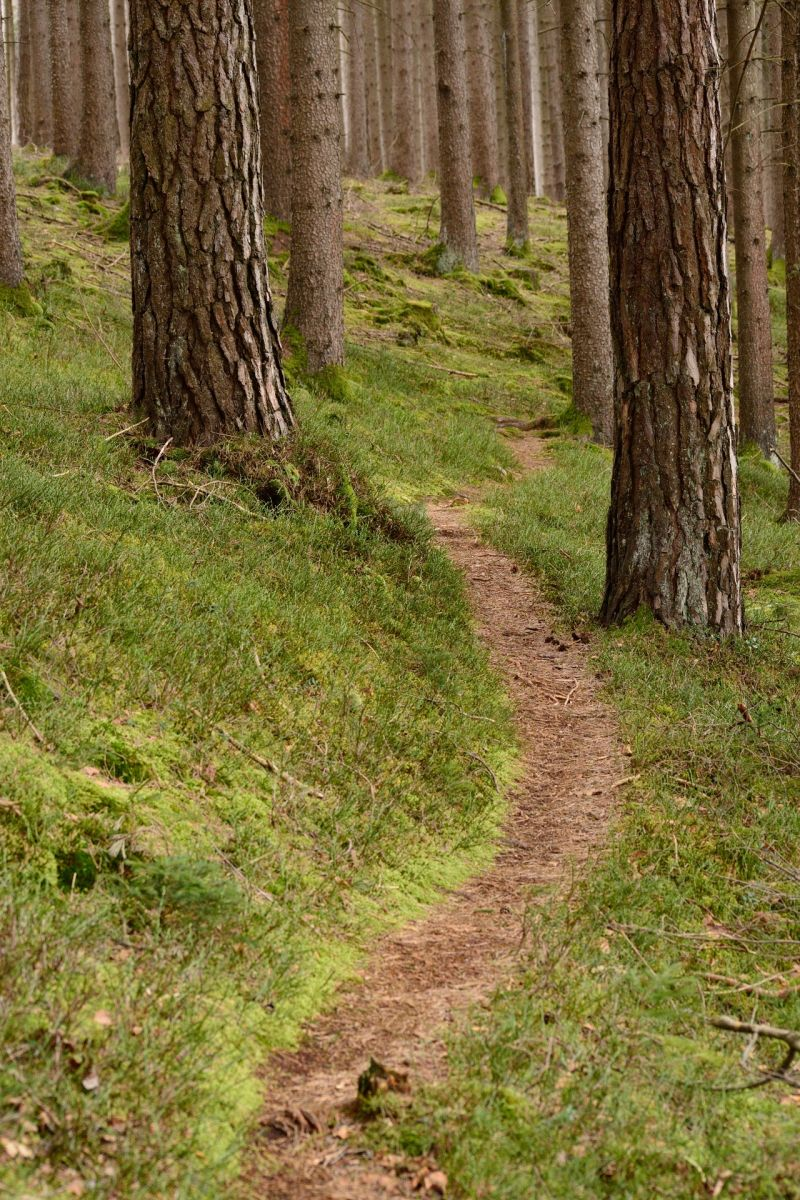 Wald Pfad, pixabay