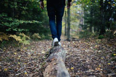 Wald - spazieren, pixabay