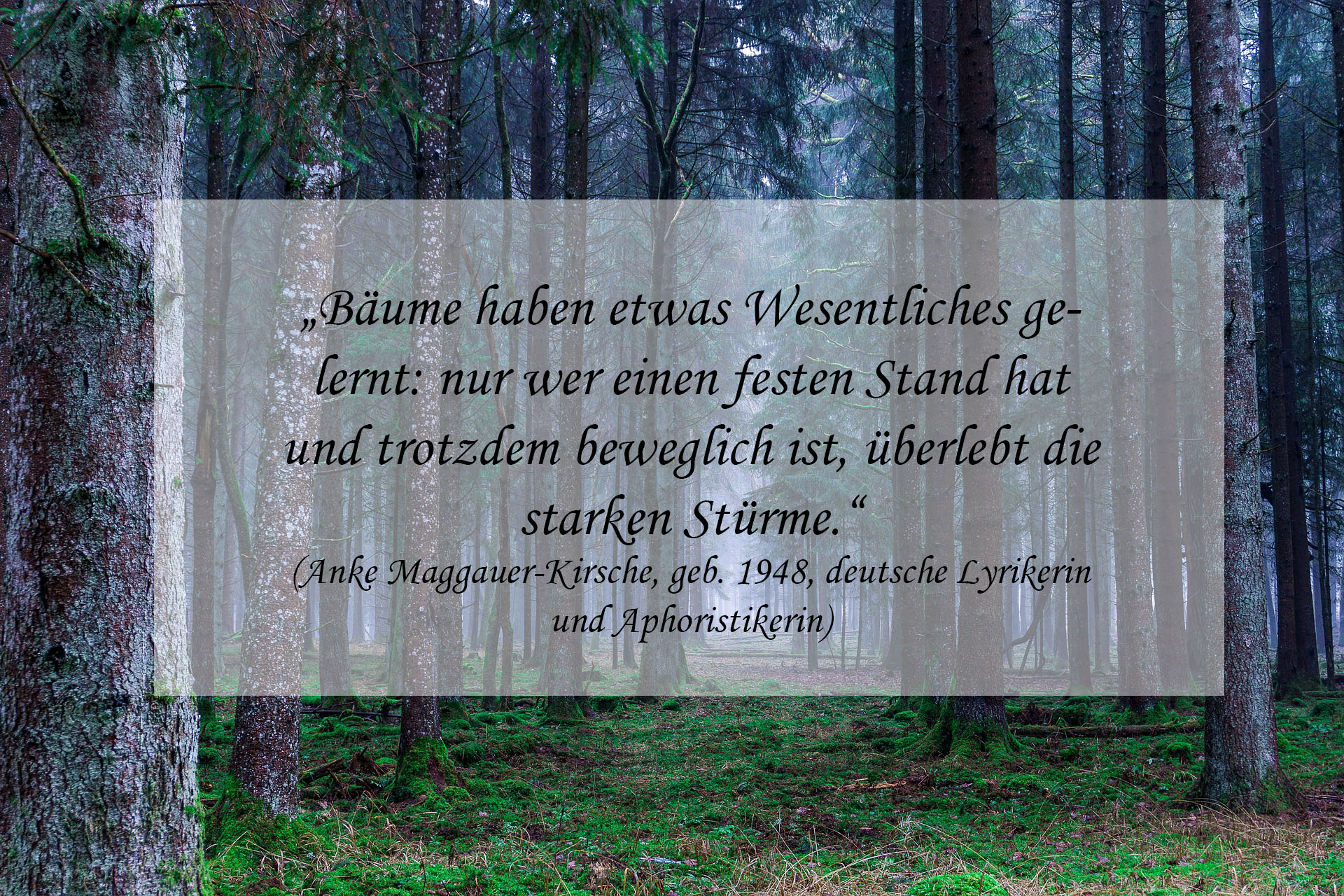 Waldbaden Die Heilkräfte Der Natur Erleben