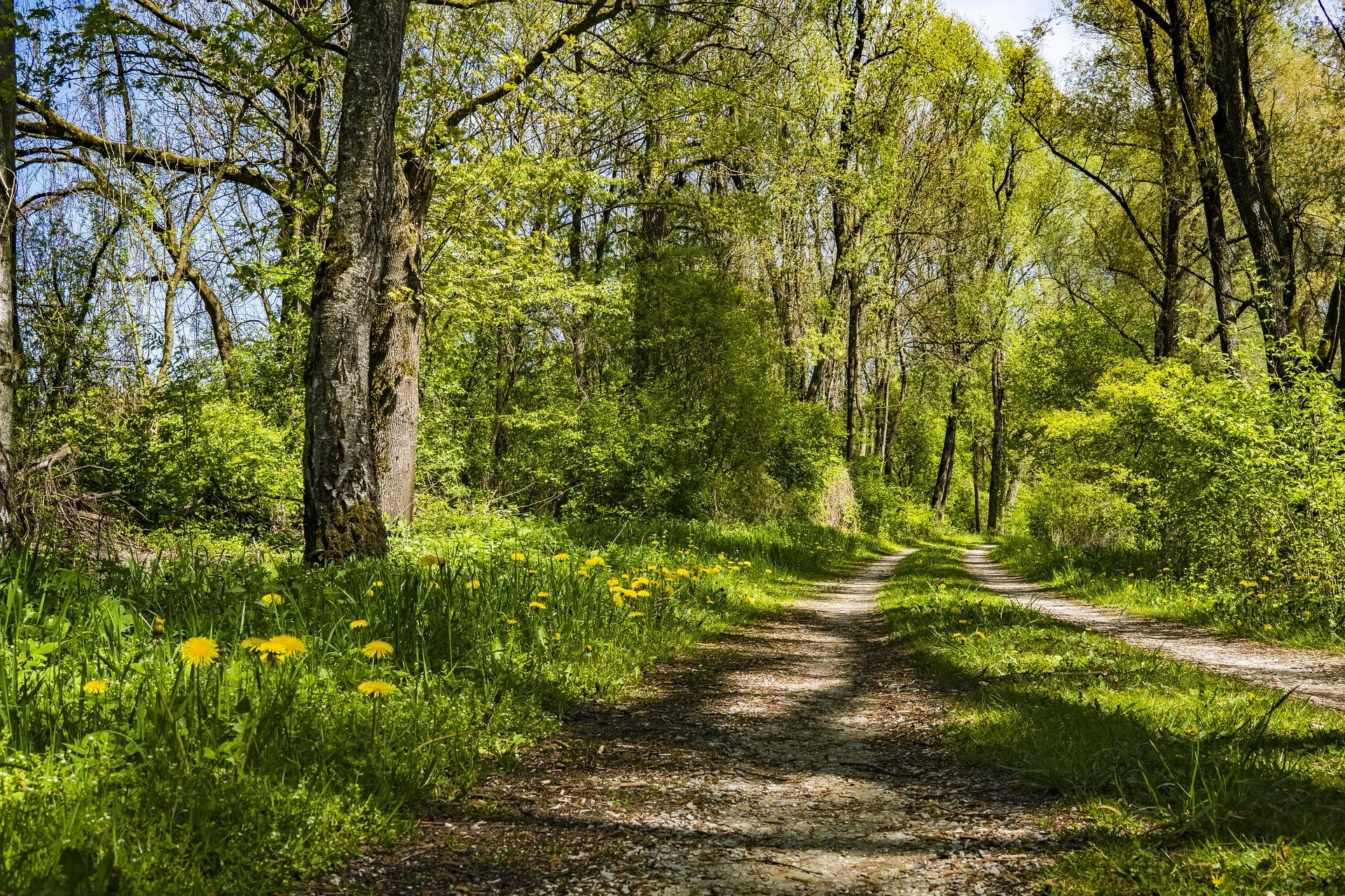 Waldweg - Waldbaden, pixabay