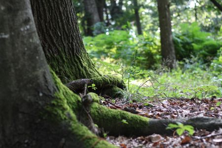 Wald, pixabay