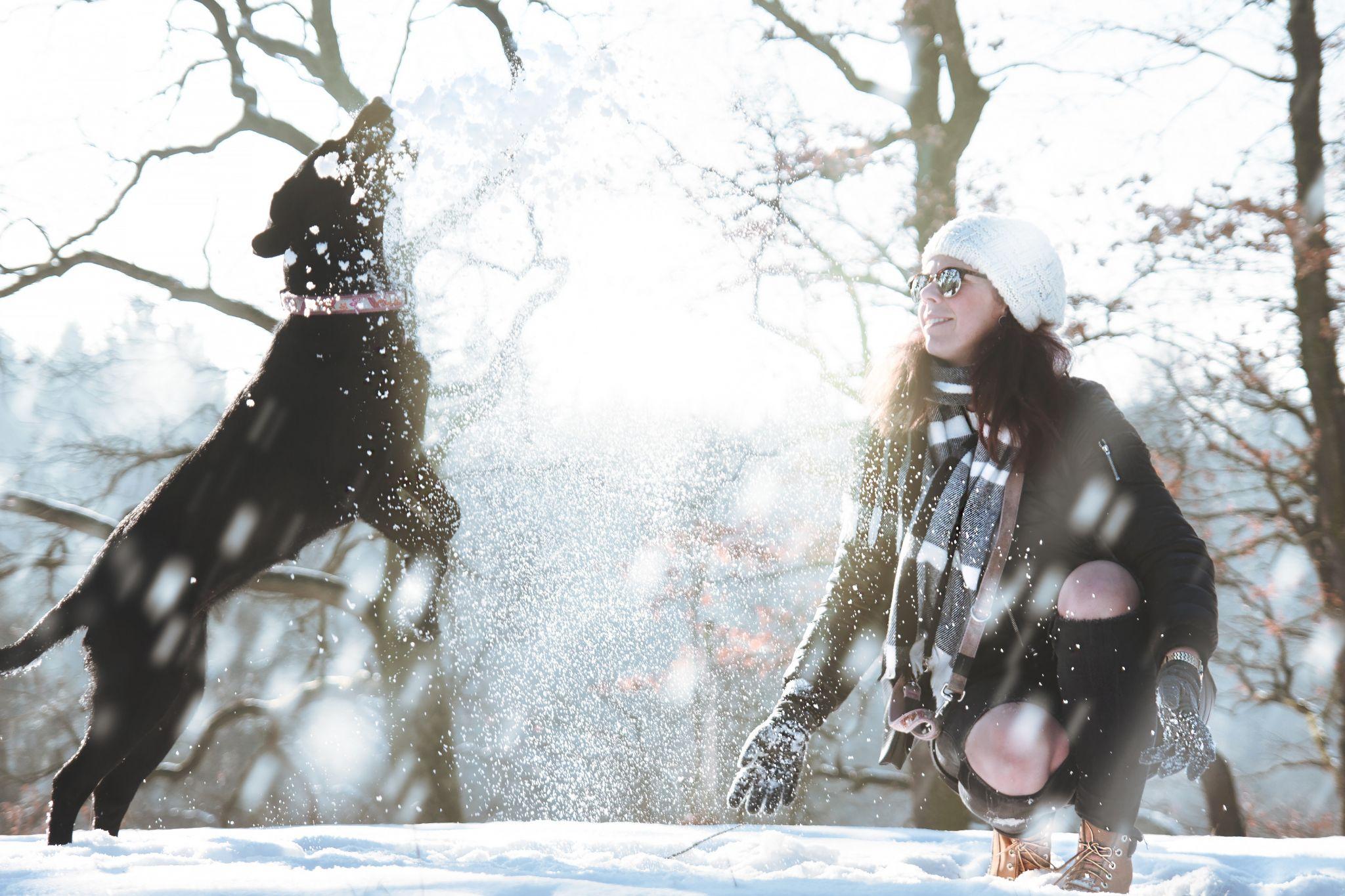 Hund Winter, pexels