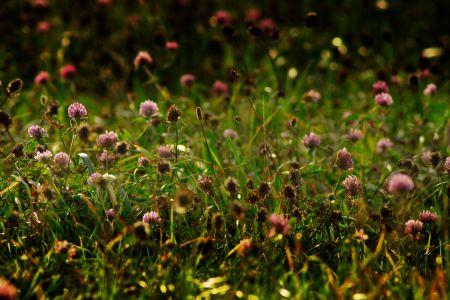 Blumenwiese, pixabay