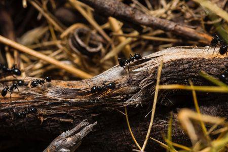 Ameisen im Wald, Pexels