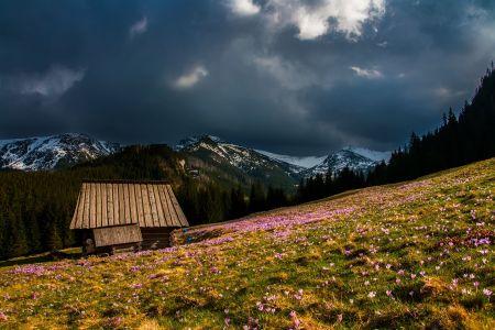 Frühling, Wiese und Berge, pexels