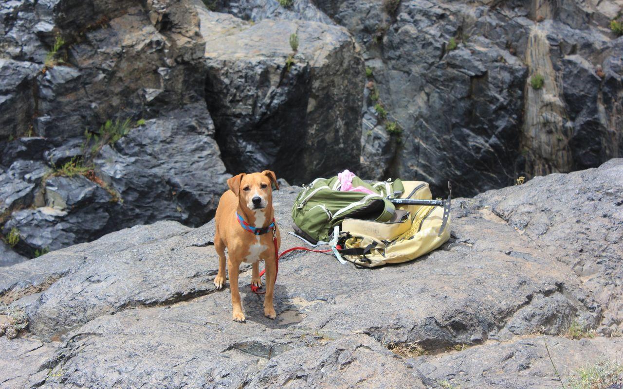 Hund am Berg mit Wanderausrüstung, © Pixabay, AhiruR