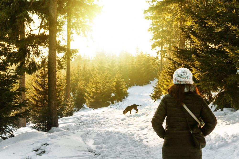 Hund im Wald_Schnee, Pexels