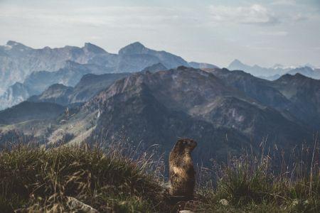 Murmeltier und Bergpanaorama, Unplash