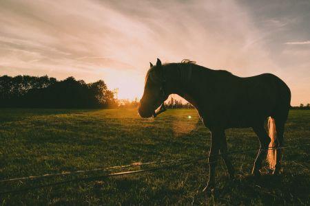 Pferd auf Koppel, pexels