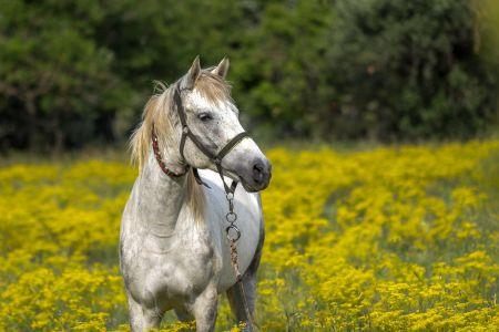 Pferd in Wiese, Pixabay
