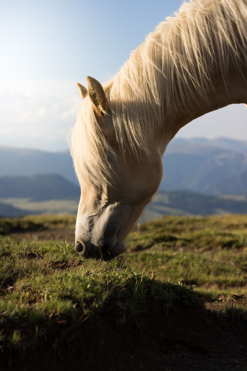 Pferd, pexels