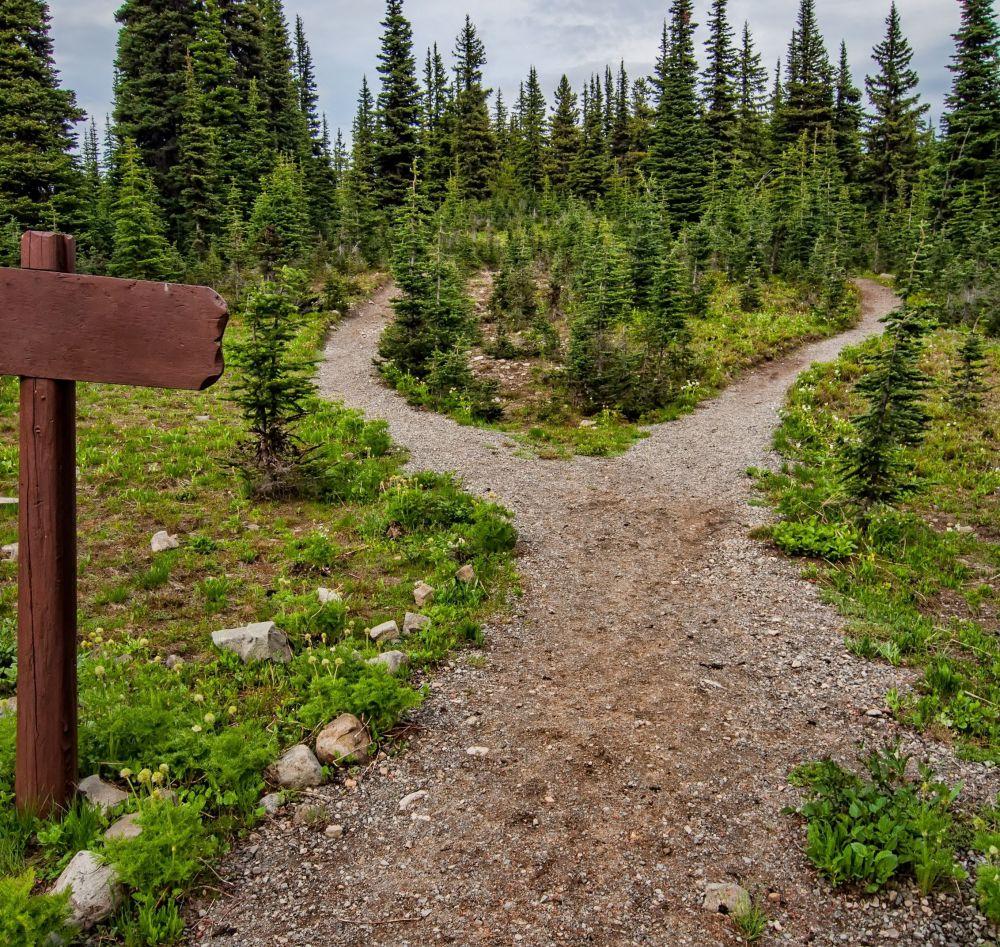 wanderweg im Wald, pexels