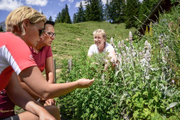Kräuterwandern in der Region Hochkönig, © Hochkönig Tourismus