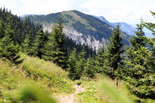 Waldweg © Mostviertel Tourismus weinfranz.at