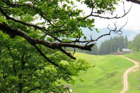 Wanderweg zur Zwieselalmhütte im Hintergrund, © TVB Annaberg-Lungötz