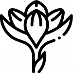 crocus, Flaticon by Freepik