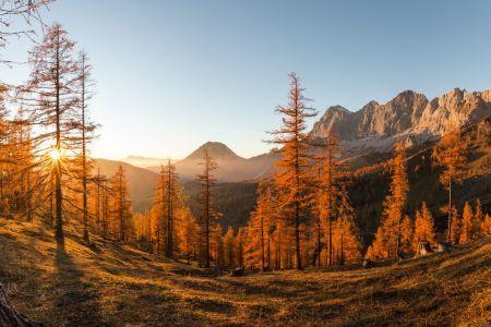 Herbst am Brandriedel, Ramsau am Dachstein, © Coen Weesjes