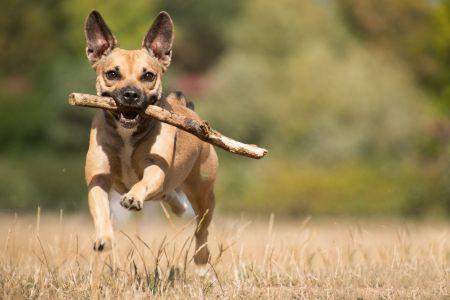 runningdog,pixabay