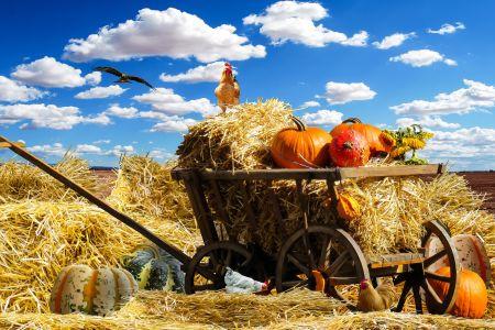 thanksgiving(c)pixabay