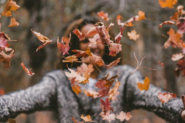 Blätter Herbst, Unsplash