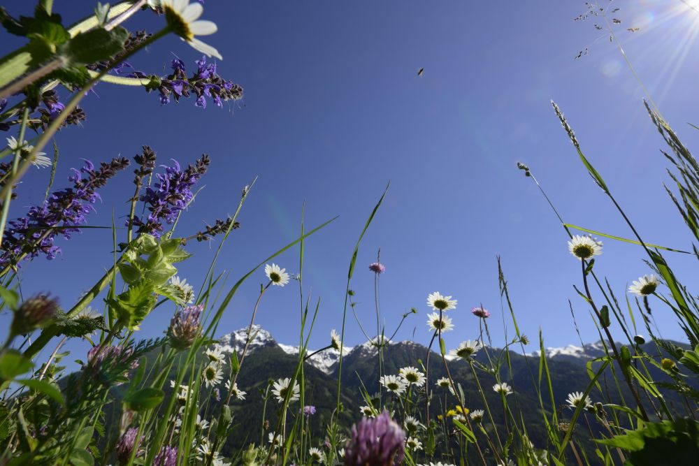Sommertouren, © Nationalpark Hohe Tauern, Solvin Zankl