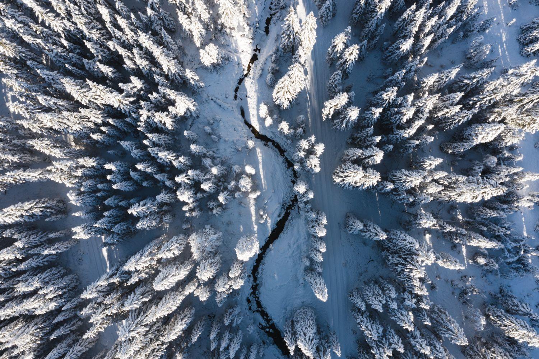 Winterwald Zauchensee