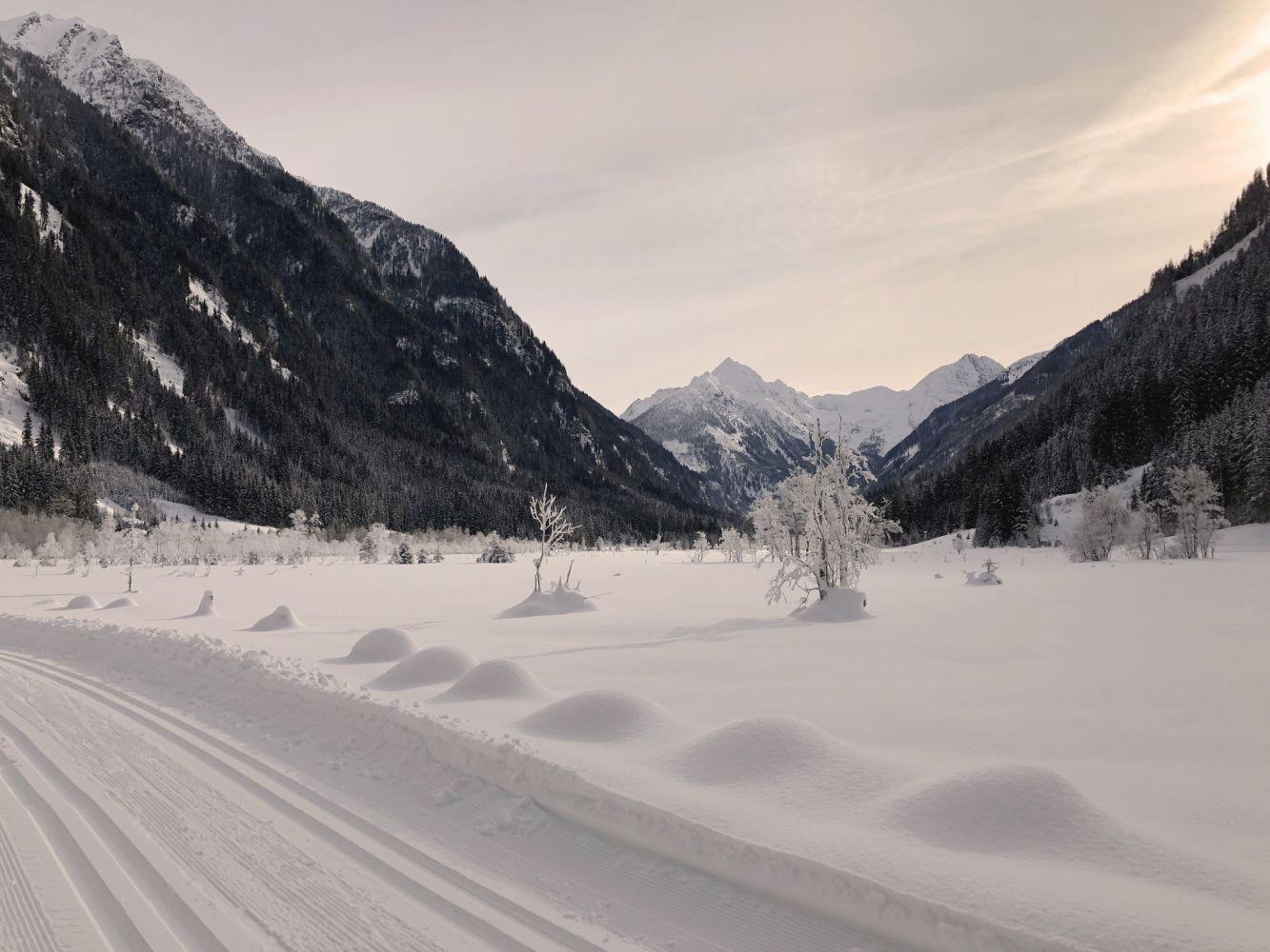 Herrliche Winterlandschaft entlang der Kristallloipe im Tettermoor