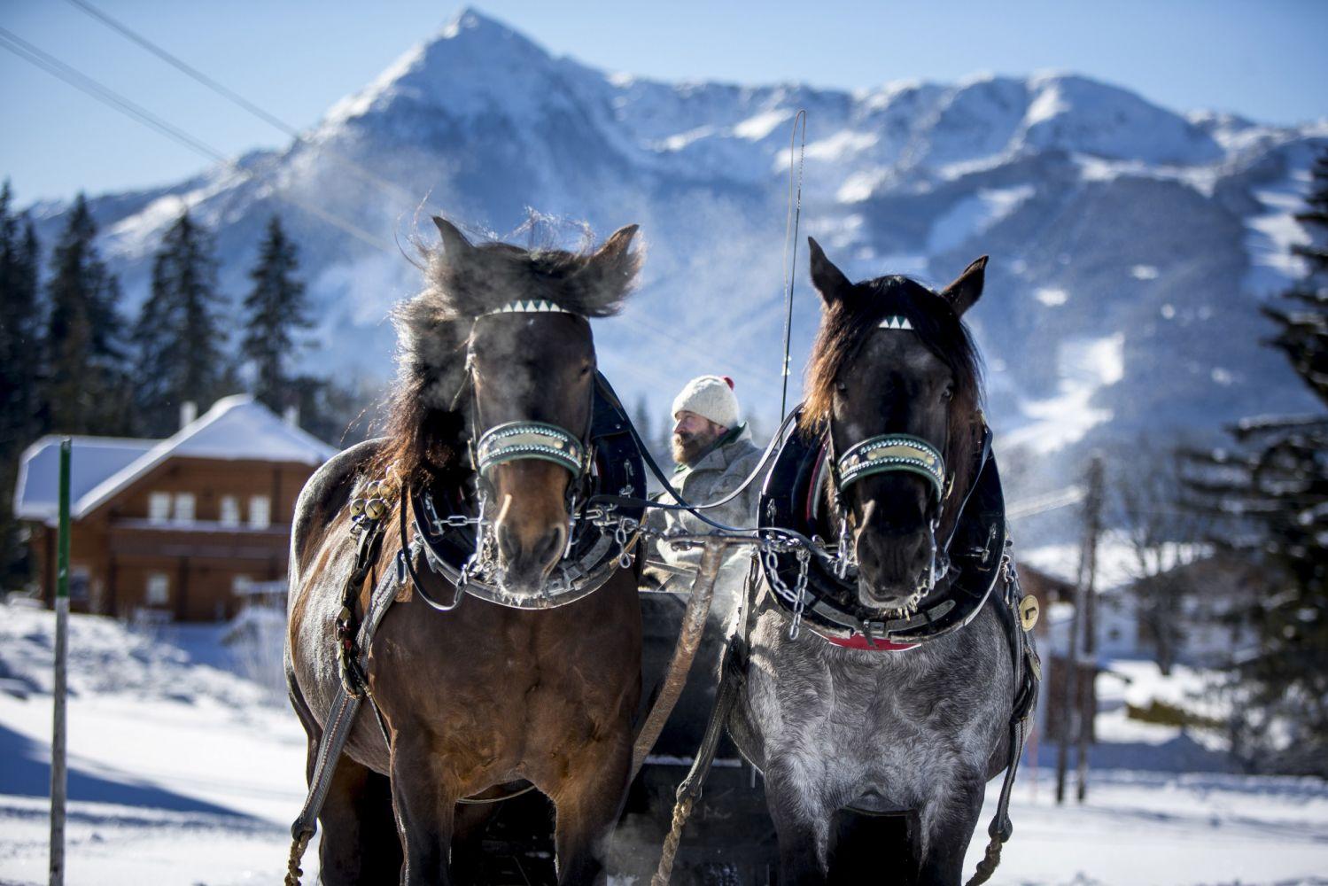 Mit dem Pferdeschlitten durch verträumte Winterlandschaften