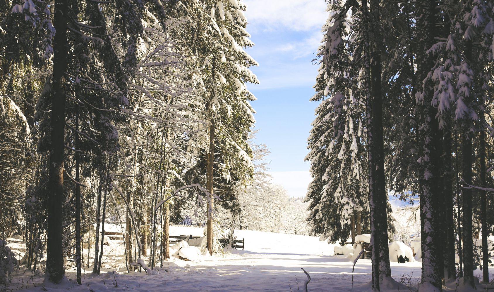 Der winterliche Wald des Kulmbergs