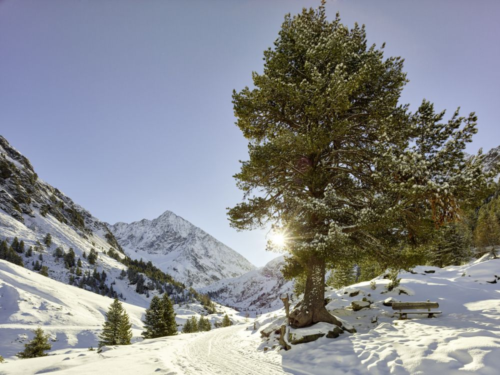 Schneeschuhwanderung Gries Aufstieg zur Nissl Alm © Ötztal Tourismus